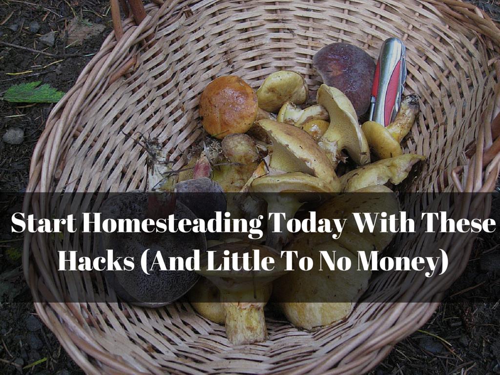 Start Homesteading Today